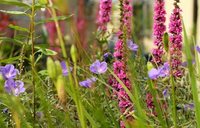 Garden landscape and design Cheltenham
