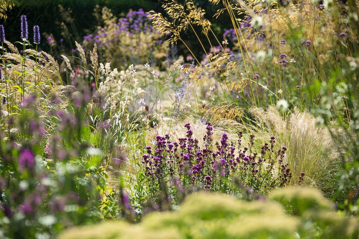 Wild flowers garden design